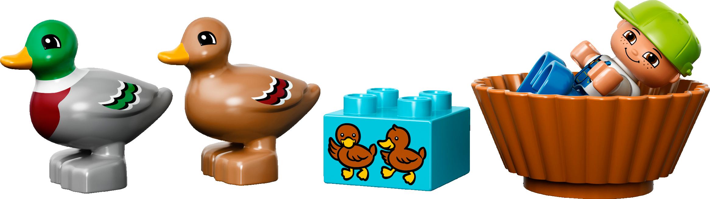 Forest: Ducks