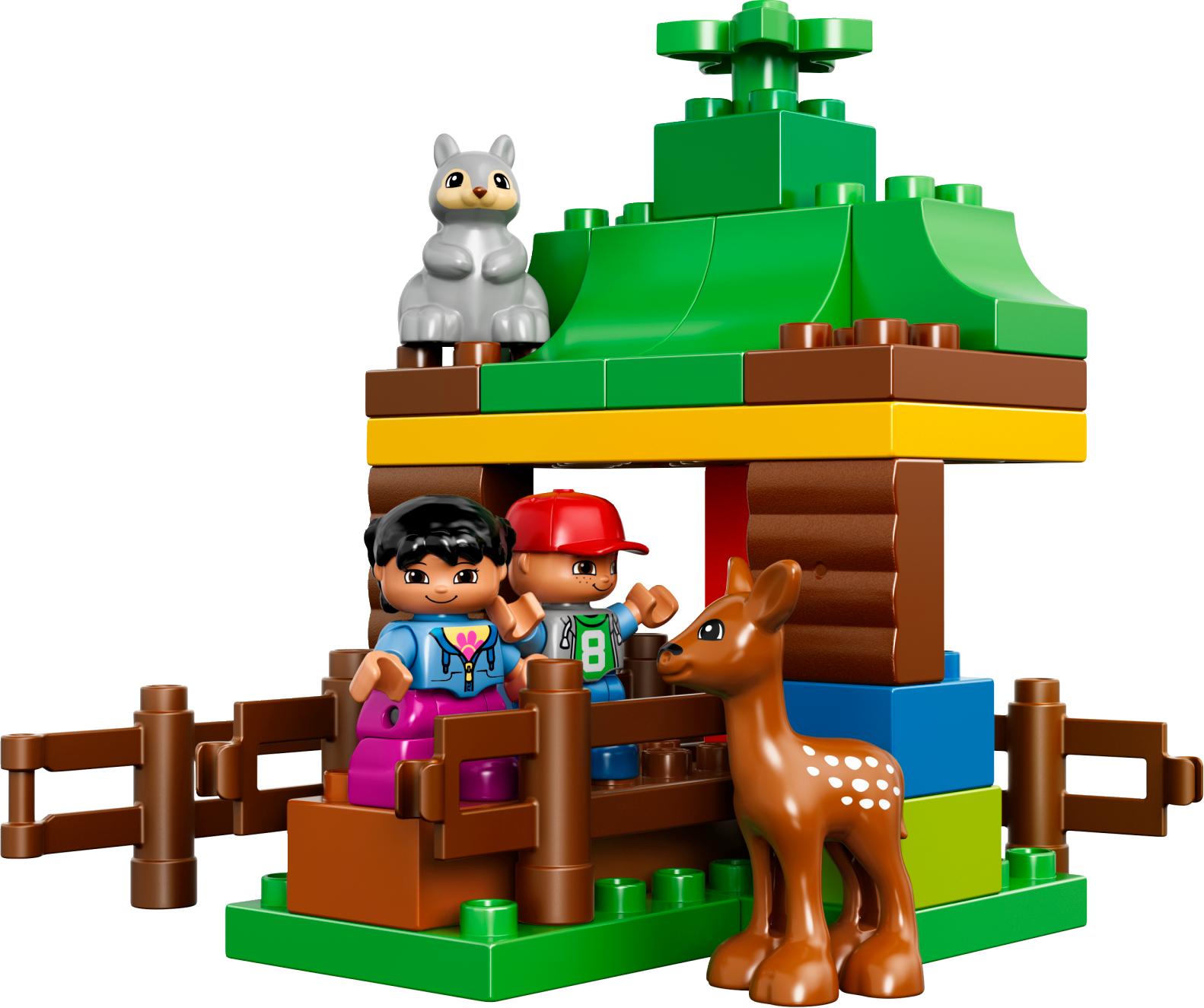 Forest: Animals